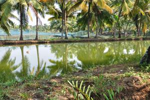 Водные поездки на каноэ по заводям это приключенческий способ посетить различные места
