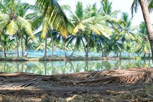Озера и пруды Кералы подходят для поездки на каноэ