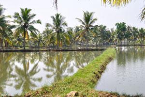 Поездка на каноэ по спокойным водам Кералы