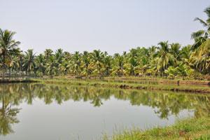 Поездка на каяках в штате Керала является лучшим способом для изучения окрестностей