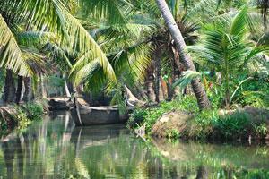 Это уникальный опыт быть так близко и почувствовать ритм жизни в сельской местности штата Керала