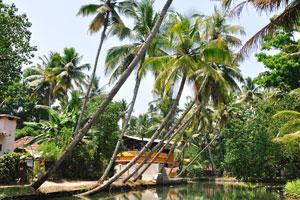 Осматривайте зелёные рисовые поля и кокосовые деревни на берегах реки во время вашего тура по заводям Кералы