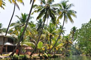Катание на каноэ по тихим заводям Кералы пришло как популярный приключенческий спорт, который охватывает всё больше и больше людей
