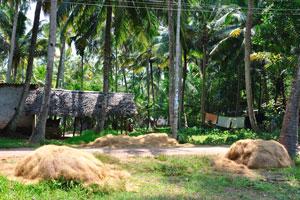Кучи кокосового волокна