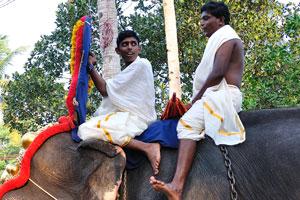Погонщики слонов на фестивале