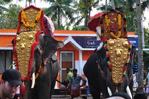 Наряженные слоны