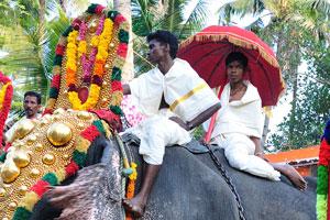 Азиатский слон. Слоны выстроились для фестиваля