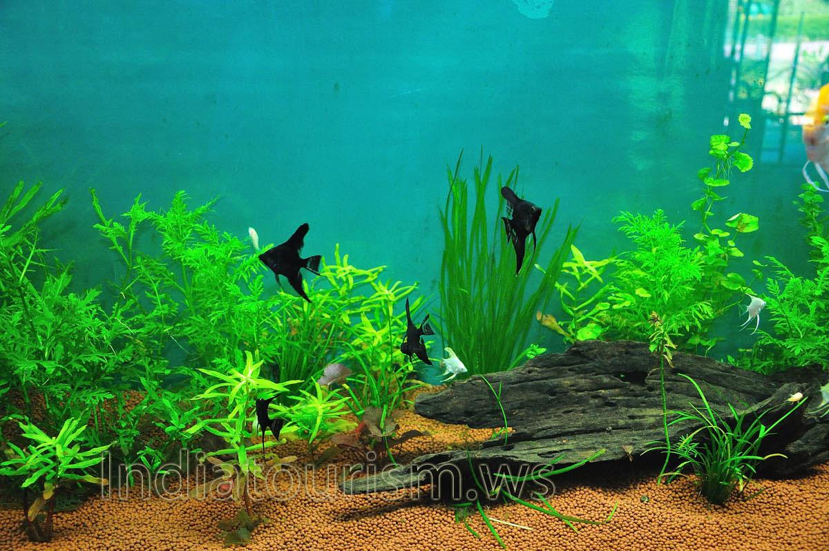 Kerala Aquarium Fish Images Aquarium Fish Images And Names 2017