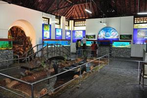 Помещение аквариума с лодкой в центре