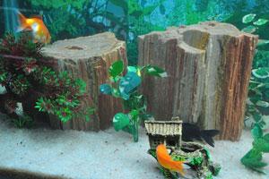 Пни украшают аквариум внутри