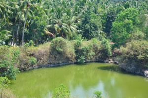 Кокосовые пальмы плотно растут вокруг озера
