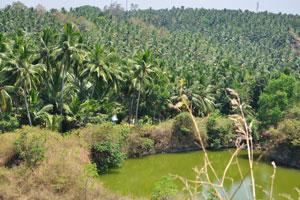 Кокосовый лес возле пляжа Ковалам