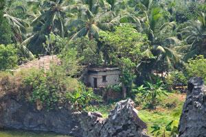 Дом в середине кокосового леса