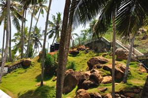 Кокосовые пальмы между камнями