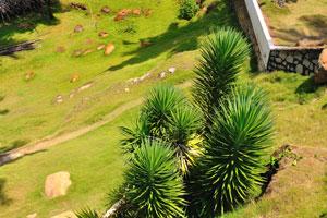 Декоративные зелёные кусты