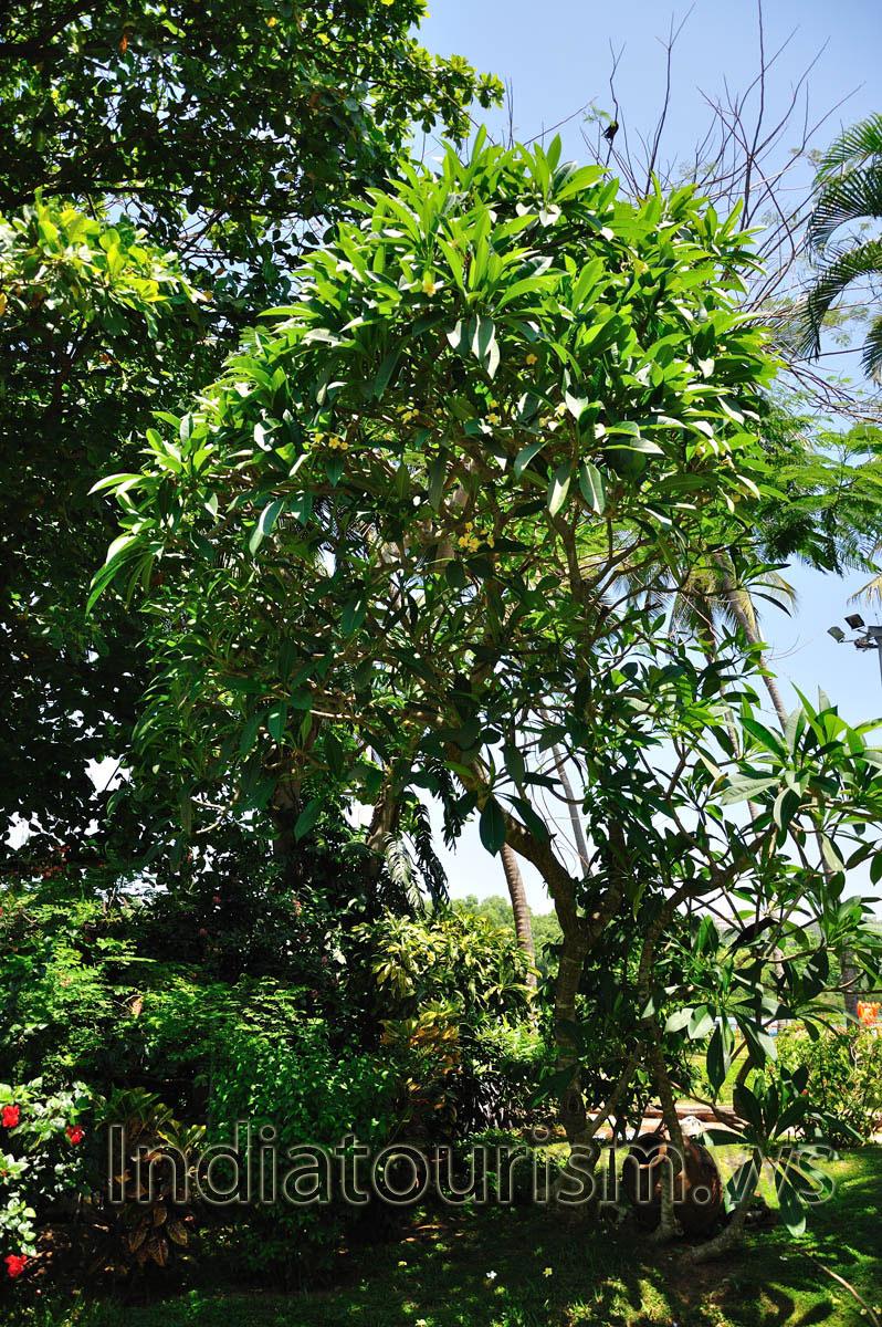 Зелёное тропическое растение