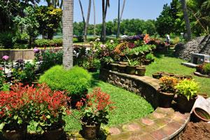 Невероятные садовые цветы