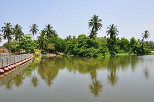 Кокосовые пальмы в Вели