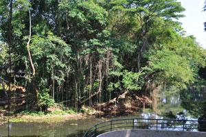 Обзорная площадка построена над озером