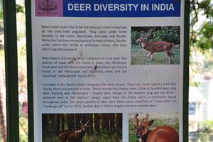 Плакат о разнообразии оленей в Индии