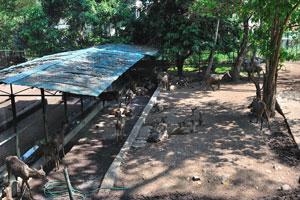 Индийские замбары в тени зоопарка Тривандрума