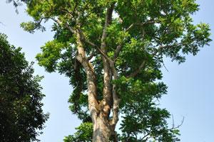 В зоопарке полно больших деревьев