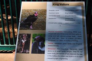 Плакат о королевском грифе