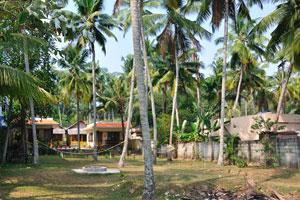 Гамаки прикреплены к кокосовым пальмам