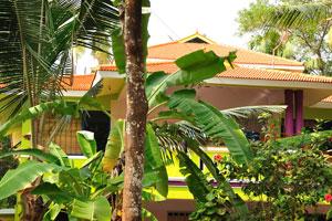 Банановые деревья в саду