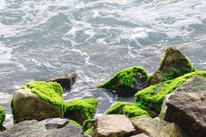 Зелёный мох покрыл камни