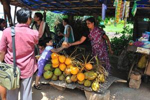 Продажа зелёных и оранжевых кокосов