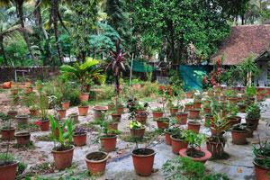 Садовые цветы в горшках. Дом отдыха «Эдемский сад»