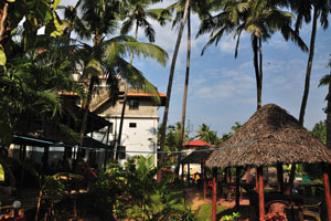 Кокосовые пальмы над рестораном «Мама Чомпос»