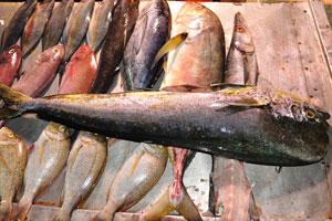Много видов живой рыбы