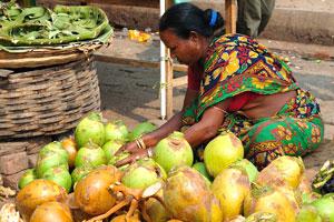 Продажа оранжевых и зелёных кокосов