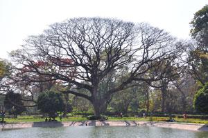 Дерево раскинуло свои ветви у пруда