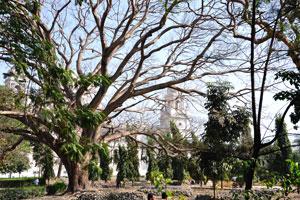 Мемориал Виктории едва виден через растительность парка