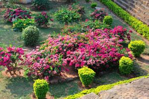 Яркие цветы Удаягири