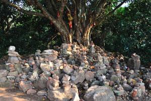 Дерево в верхней части Кхандагири