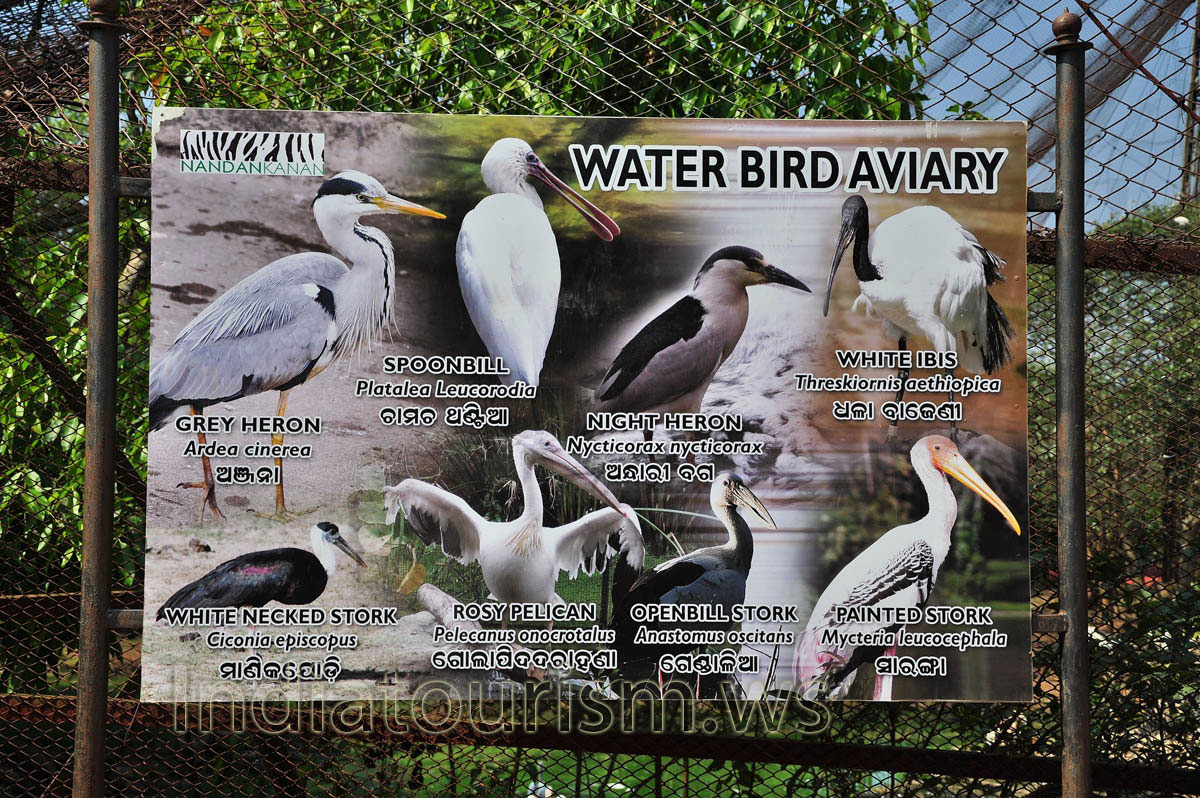 list of birds in india pdf