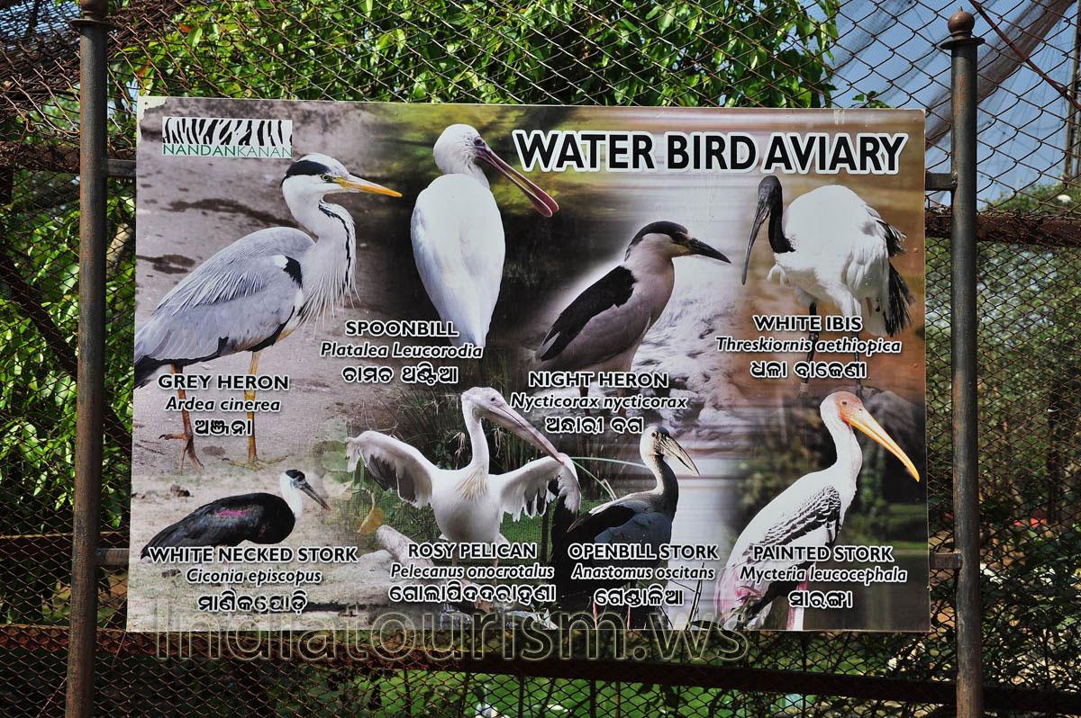 Birds Of India Pdf