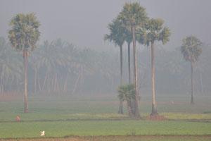 По дороге из Пури в Бхубанешвар в 6 часов утра