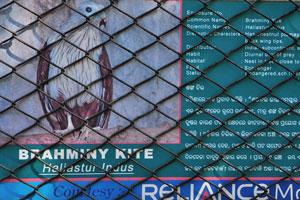 Плакат о Браминском коршуне
