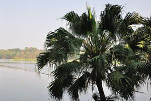 Пальма растёт на берегу озера