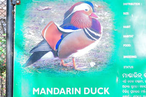 Плакат о мандаринке
