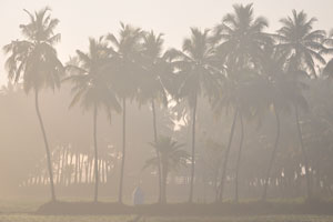 Кокосовые пальмы едва видны сквозь дымку тумана
