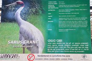 Плакат об индийском журавле