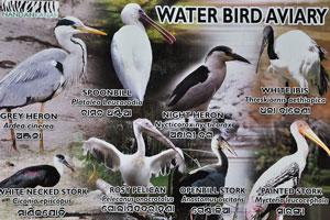 Список птиц, обитающих в вольере. Серая цапля, Колпица, Ночная цапля, Белый ибис, и т.д.