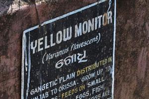 Плакат о жёлтом варане