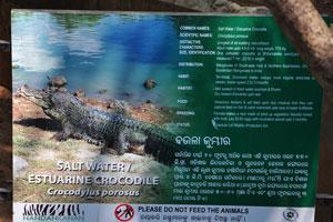 Плакат о гребнистом крокодиле